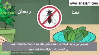 روش های ساده برای دفع حشرات خانگی