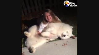 تمام دلایلی که ثابت می کنه سگهای بزرگ بهتر هستند