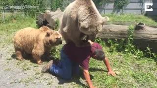 بازی کردن خرس های تحت حمایت با انسان
