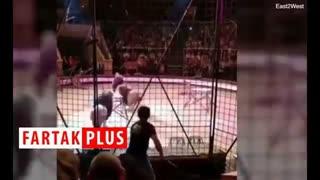 حمله وحشتناک شیر نر به مربیاش در سیرک + فیلم
