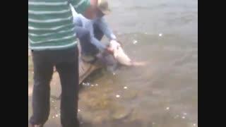 فیلم ماهیگیری کپور 15 کیلویی