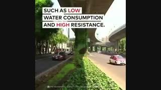 پوشش گیاهی عمودی در شهر مکزیکو سیتی