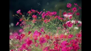 ناخنک - مرکز چشم پزشکی دکتر علیرضا نادری