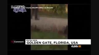 فرار جالب تمساح از دست ماموران محیط زیست