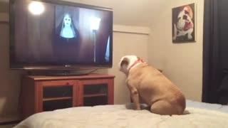 واکنش سگ بولداگ به فیلم ترسناک احضار !!!