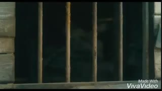 میکس بسیار زیبا از فیلم پسر گرگنما