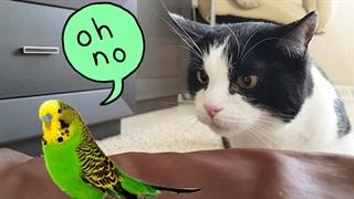مواجههی گربه با پرندگان به صورتهای فیزیکی مختلف