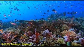 یک فنجان موزیک ویدئو : اقیانوس 3 هیاهو