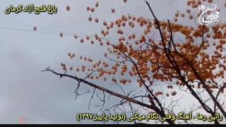 نماهنگ عاشقانه وقتی نگام میکنی از راتین رها + باغ فتح آباد کرمان