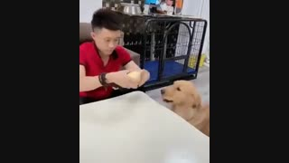سگ ها آنقدر هم که فکر میکنید احمق نیستن!!