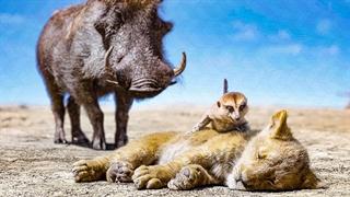 سکانسی از فیلم  The Lion King (شیرشاه)