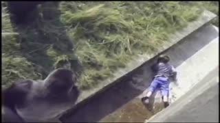 سقوط بچه در قفس گوریل
