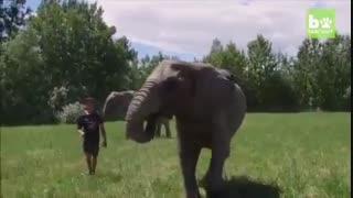نمایش آکروباتیک فیل و فیلبان-4