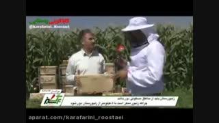زنبوردار نمونه چگونه عمل می کند؟