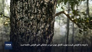 قاچاق چوب، درختان شمال را نشانه رفته است