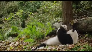 شاهکار دیزنی ؛ مستند متولد چین