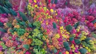 پاییز هزار رنگ یوتا