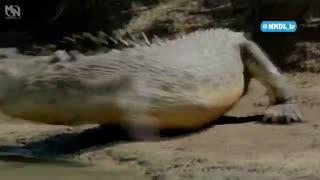 مستند رازهای حیات وحش استرالیا با دوبله فارسی - قسمت 3