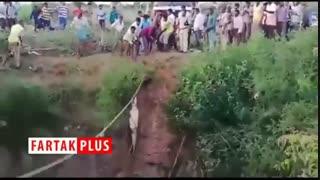 تمساحی که جانش را مدیون امدادگران هندی است