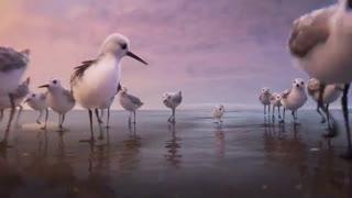 انیمیشن کوتاه جوجه کبوتر - iCinemaa.com