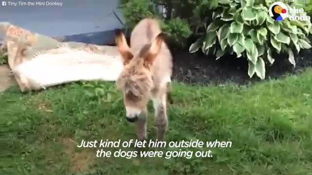 این خر کوچولو فکر می کنه که سگِ