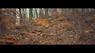 بازگشت - طبیعت پاییزی تورنتو