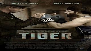 ببر-Tiger