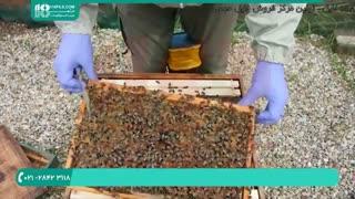 آموزش زنبورداری _ آموزش کامل